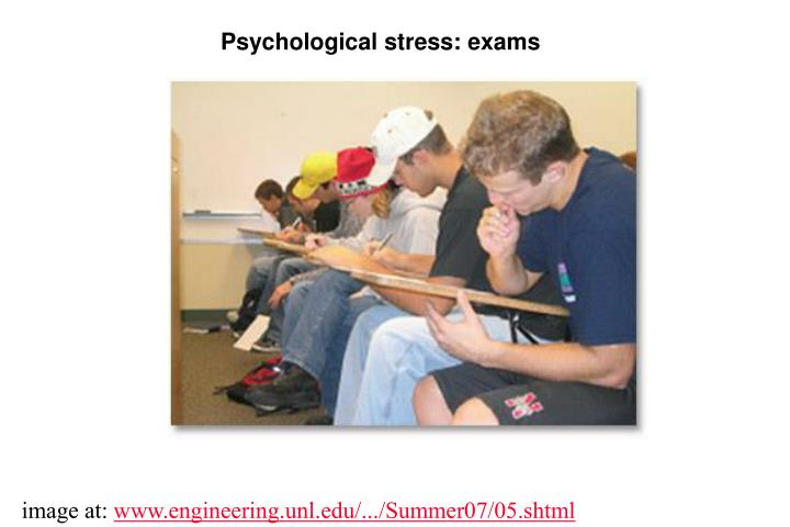 Psychological stress: exams