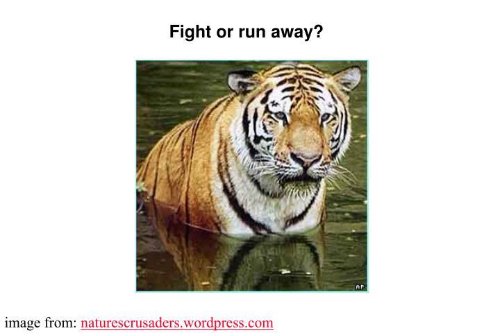 Fight or run away?