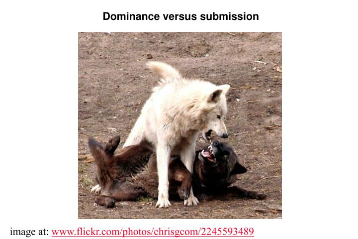 Dominance versus submission