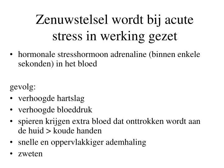 Zenuwstelsel wordt bij acute stress in werking gezet
