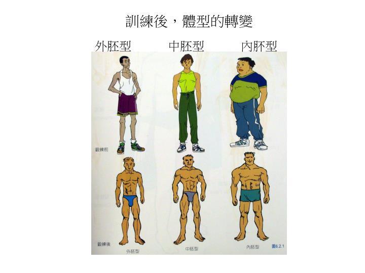 訓練後,體型的轉變