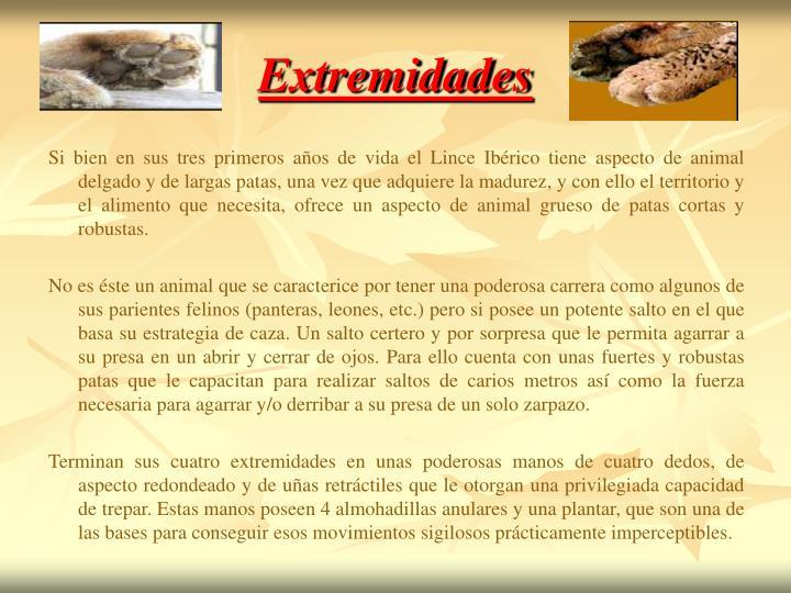 Extremidades