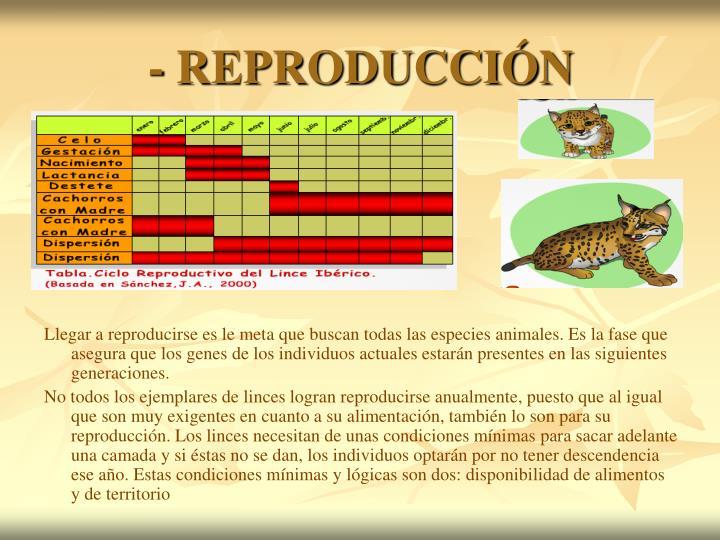 - REPRODUCCIÓN