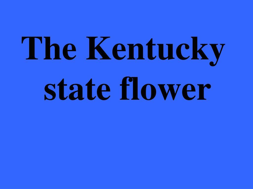 The Kentucky