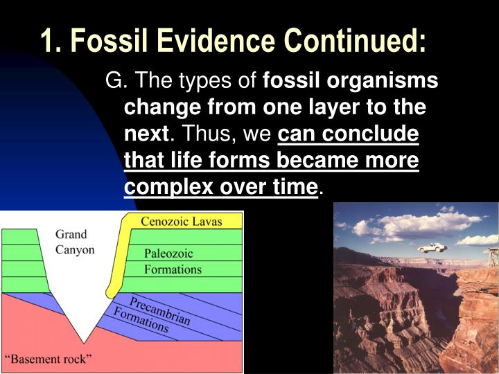 1. Fossil Evidence Continued: