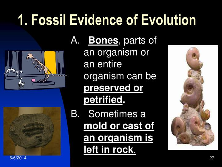 1. Fossil Evidence of Evolution
