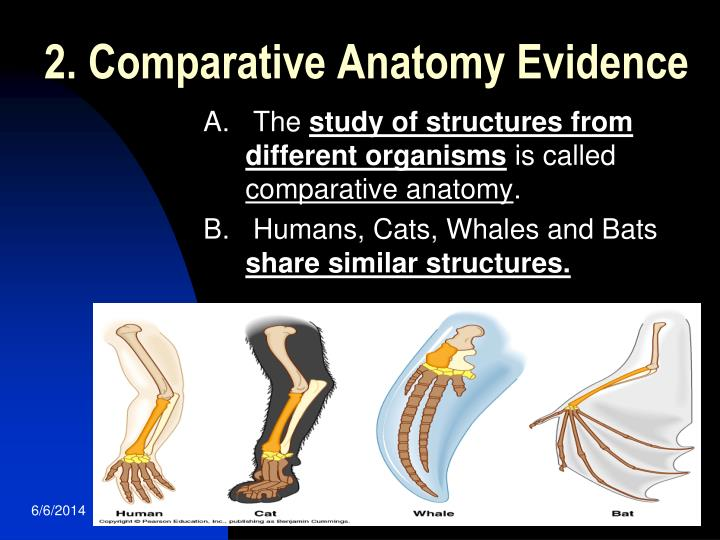2. Comparative Anatomy Evidence