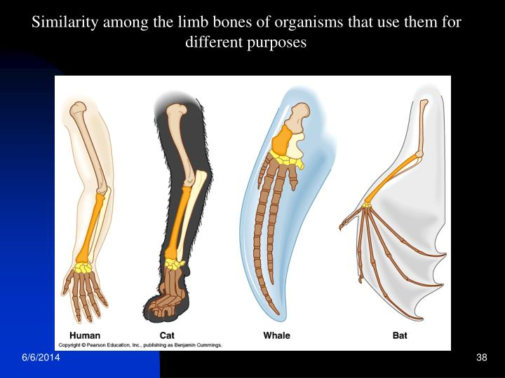 Similarity among the limb bones of organisms that use them for different purposes
