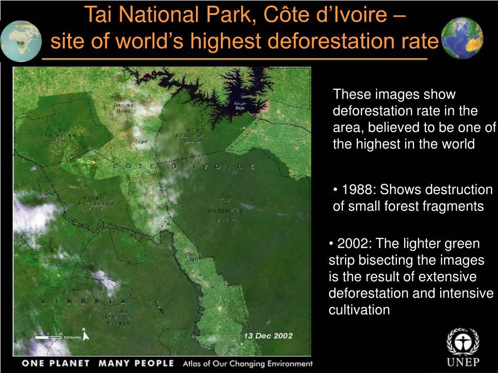 Tai National Park, C