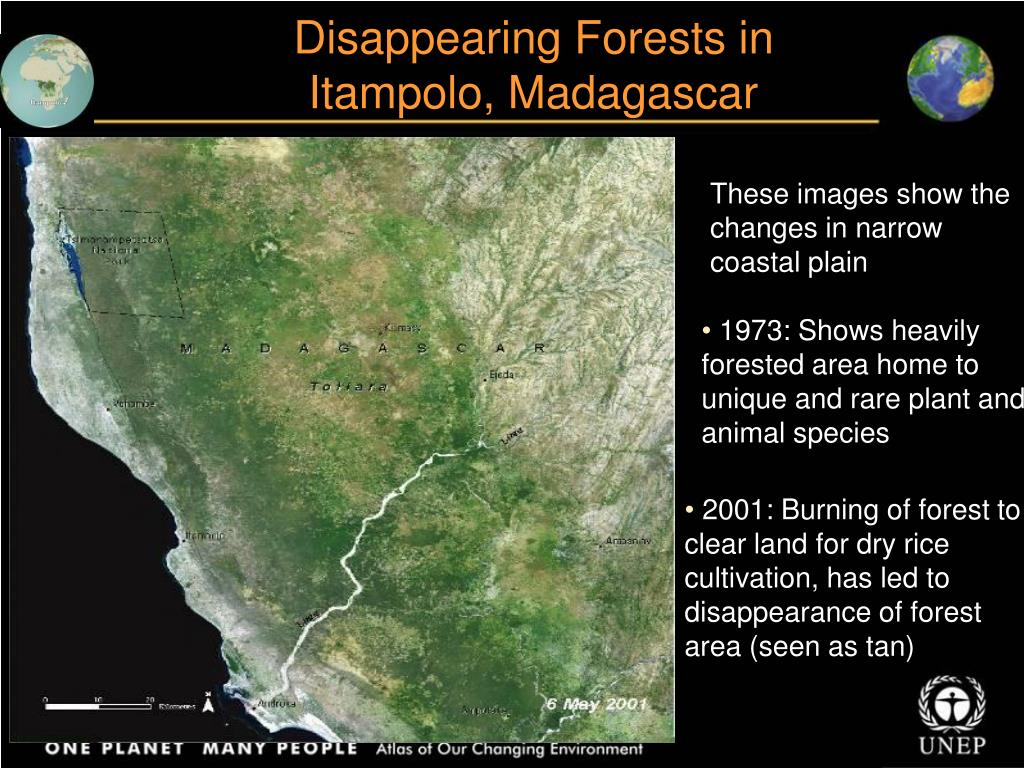 Disappearing Forests in Itampolo, Madagascar