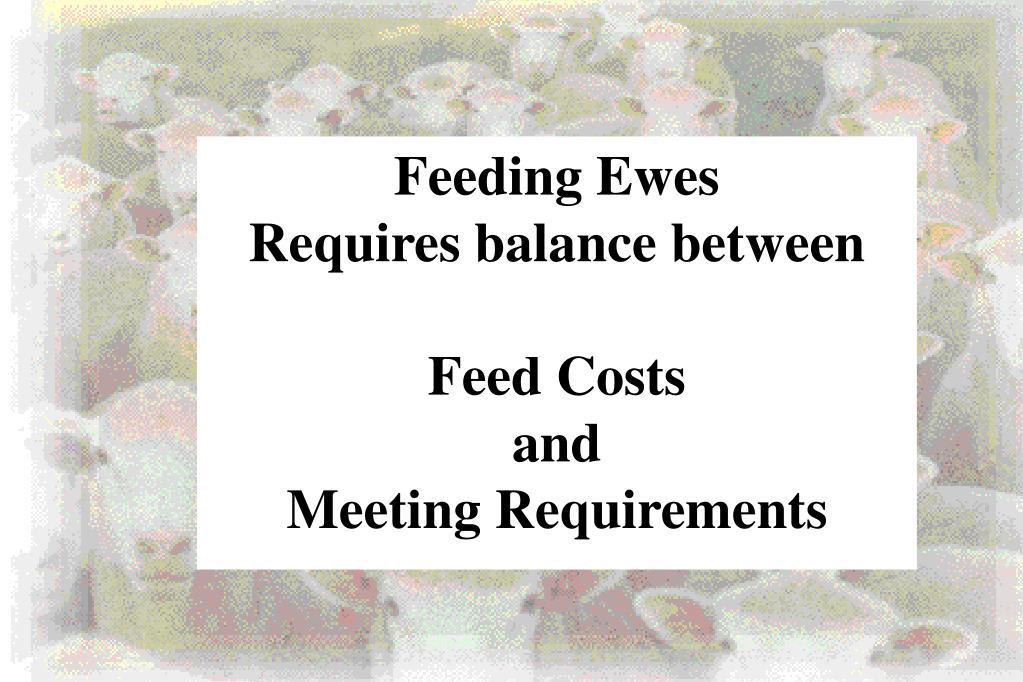 Feeding Ewes