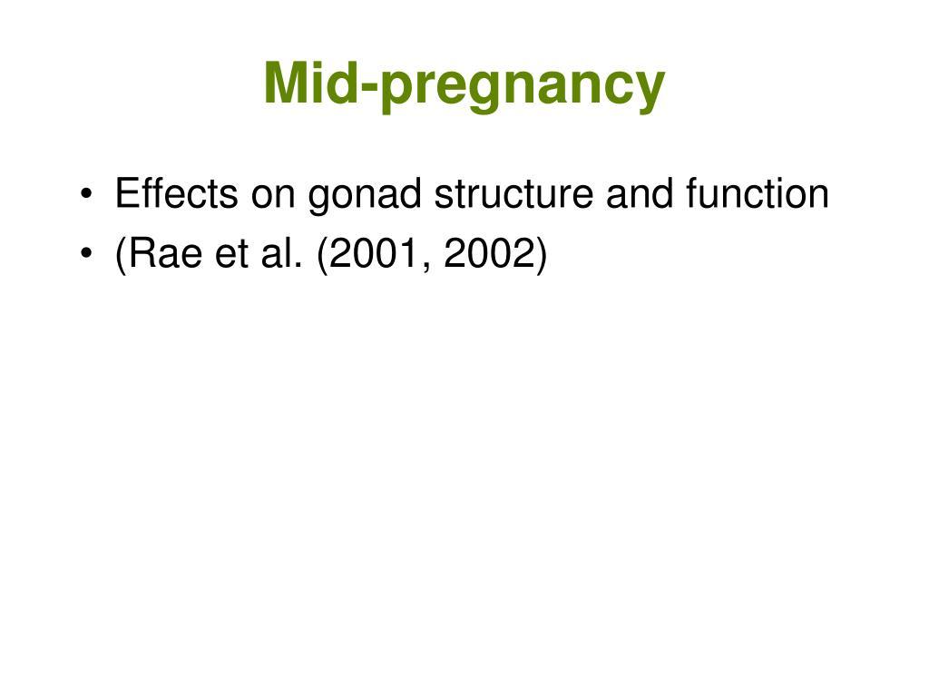 Mid-pregnancy