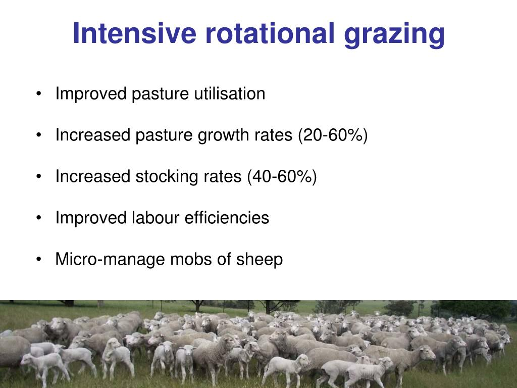 Intensive rotational grazing