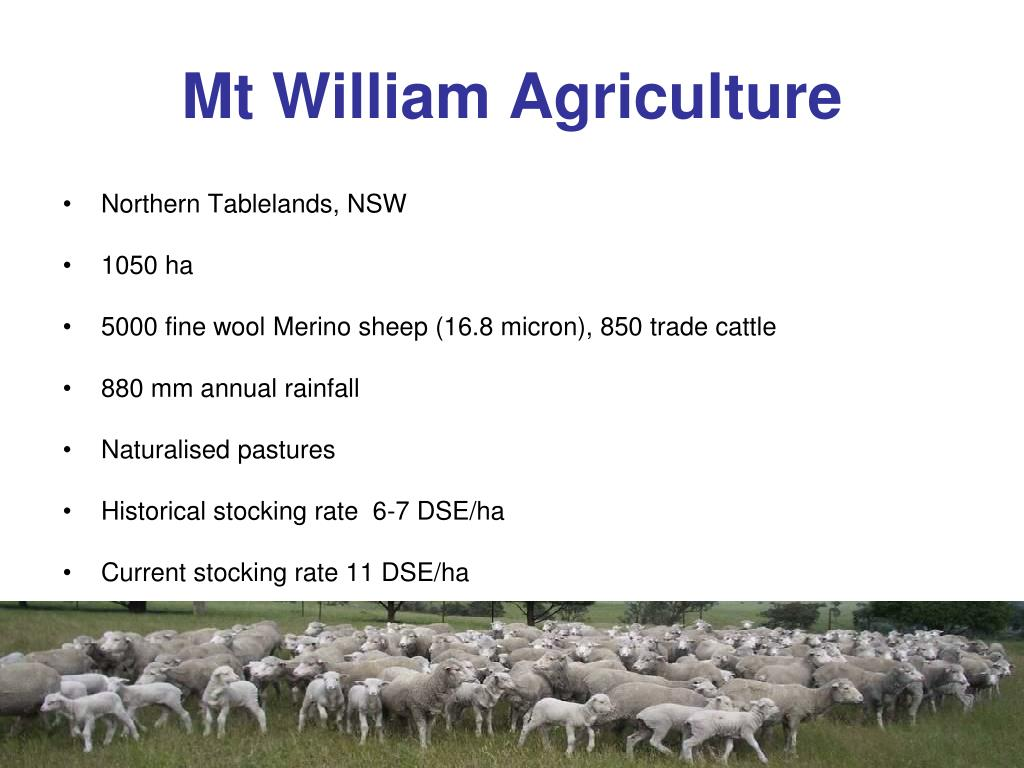 Mt William Agriculture