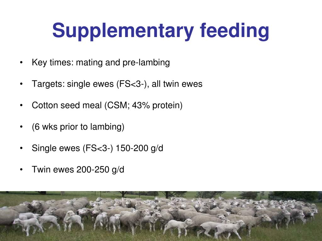 Supplementary feeding