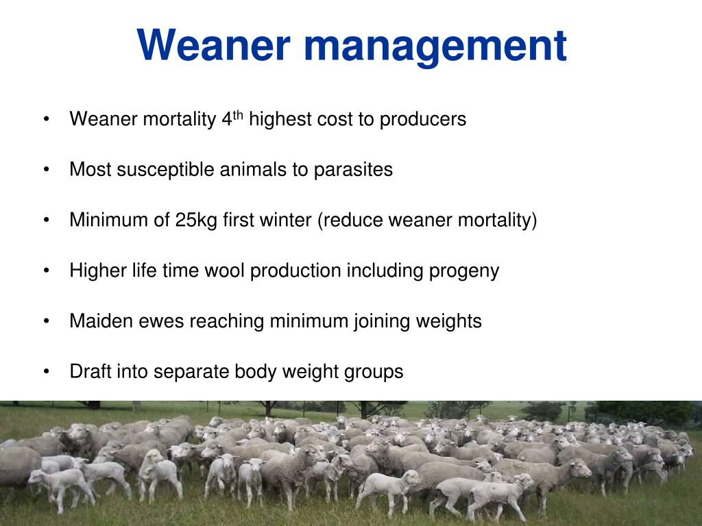 Weaner management