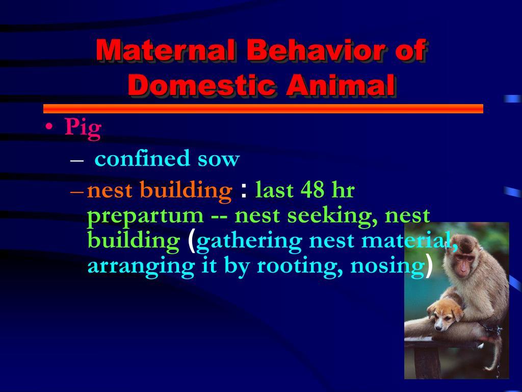 Maternal Behavior of Domestic Animal