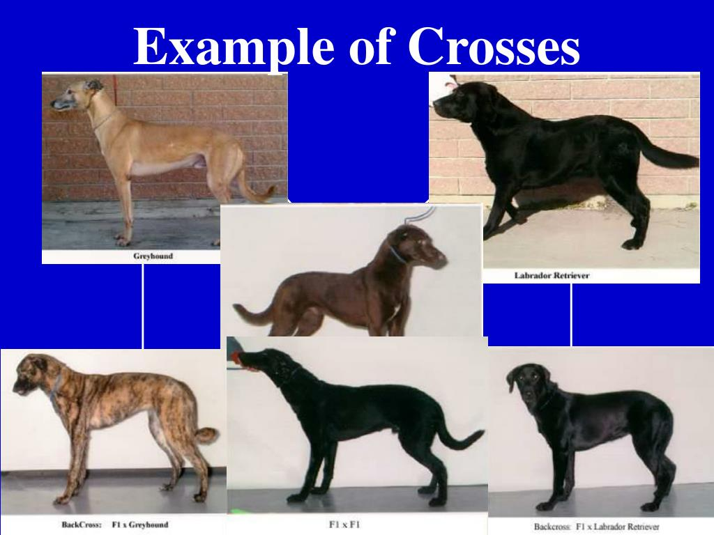 Example of Crosses