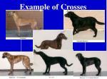 example of crosses