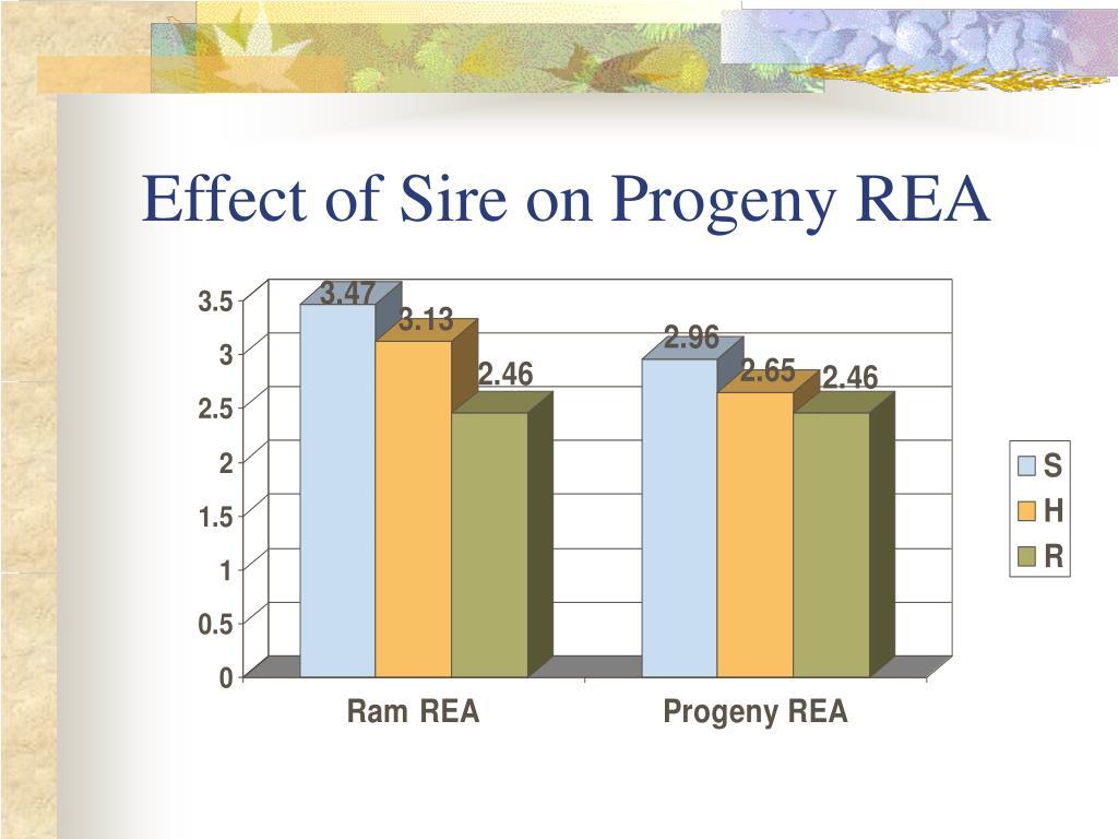 Effect of Sire on Progeny REA