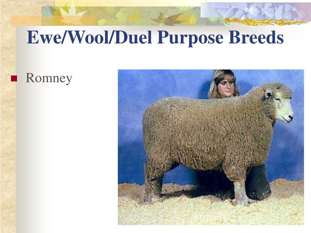 Ewe/Wool/Duel Purpose Breeds