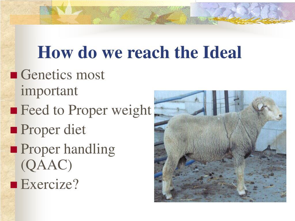 How do we reach the Ideal