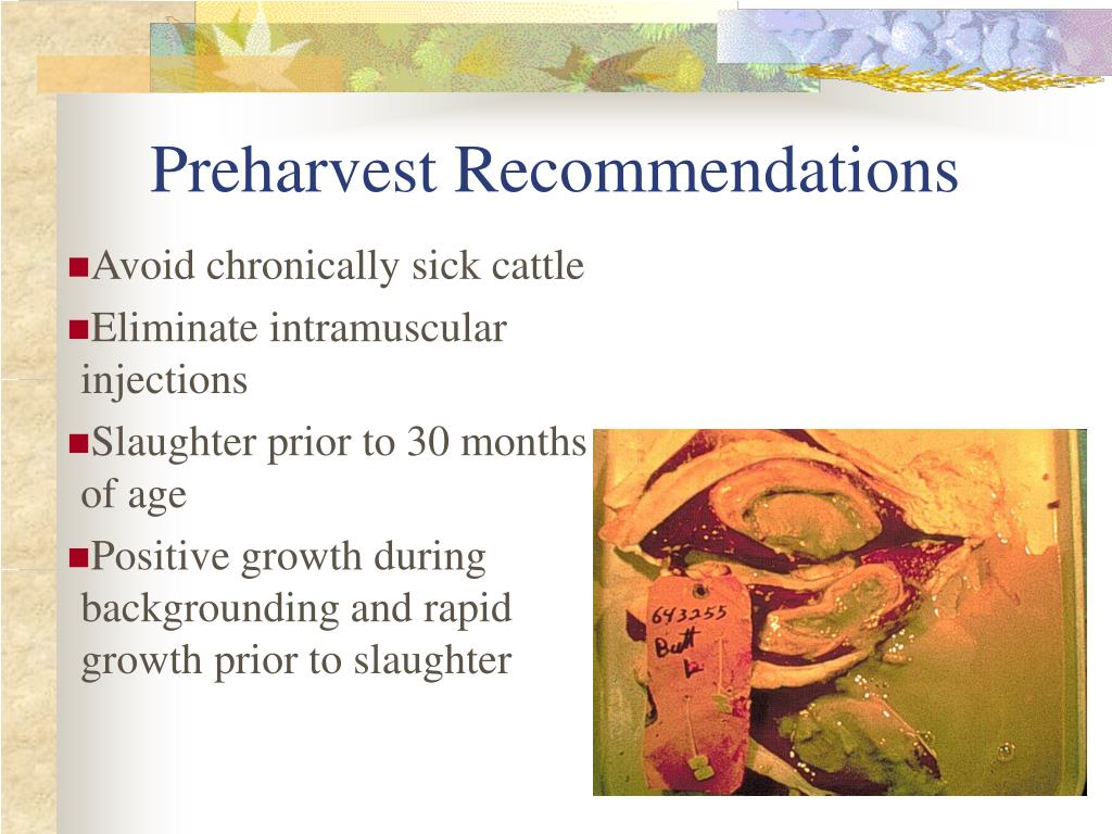 Preharvest Recommendations
