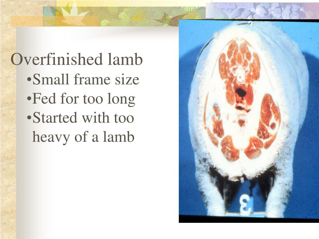 Overfinished lamb
