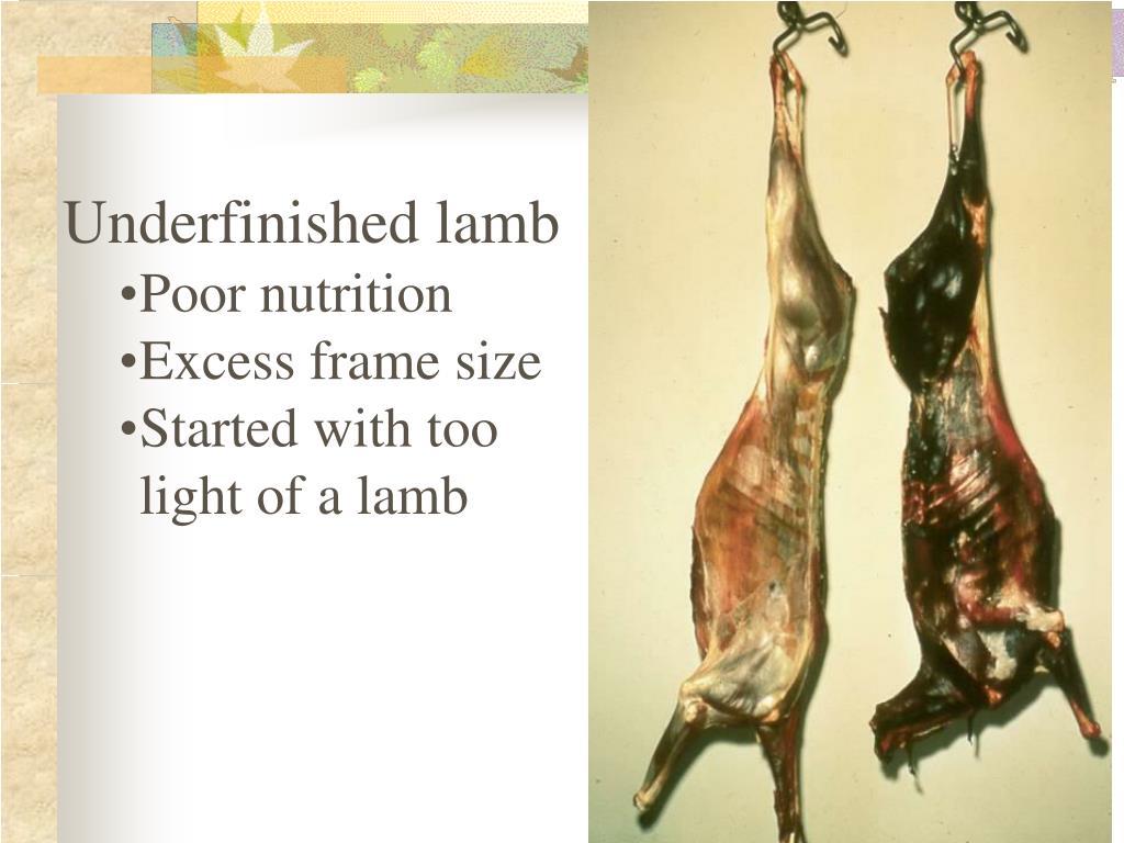 Underfinished lamb