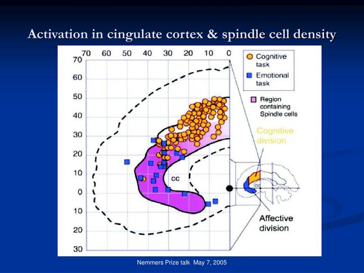 Activation in cingulate cortex & spindle cell density