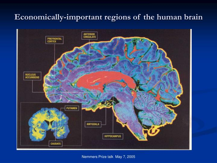 Economically-important regions of the human brain