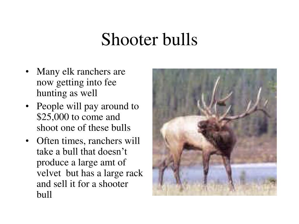 Shooter bulls