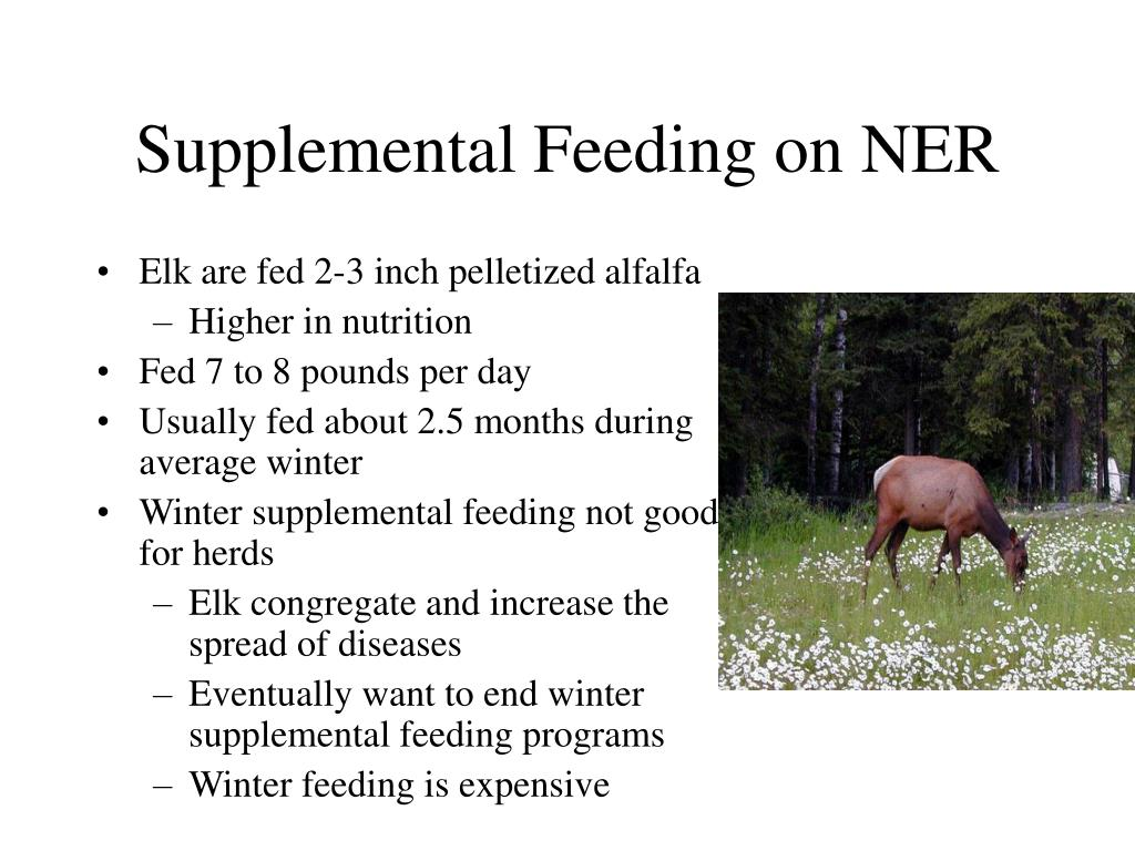Supplemental Feeding on NER