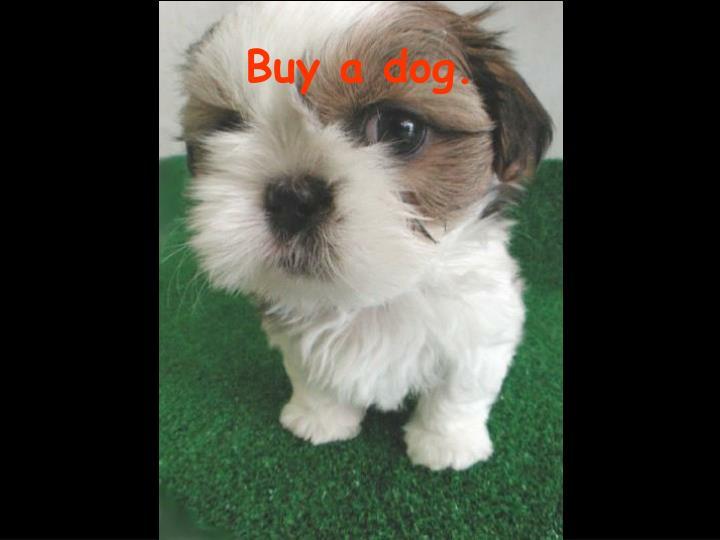 Buy a dog.