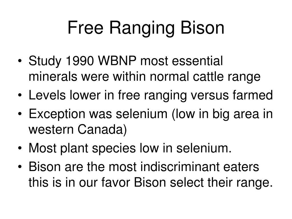 Free Ranging Bison