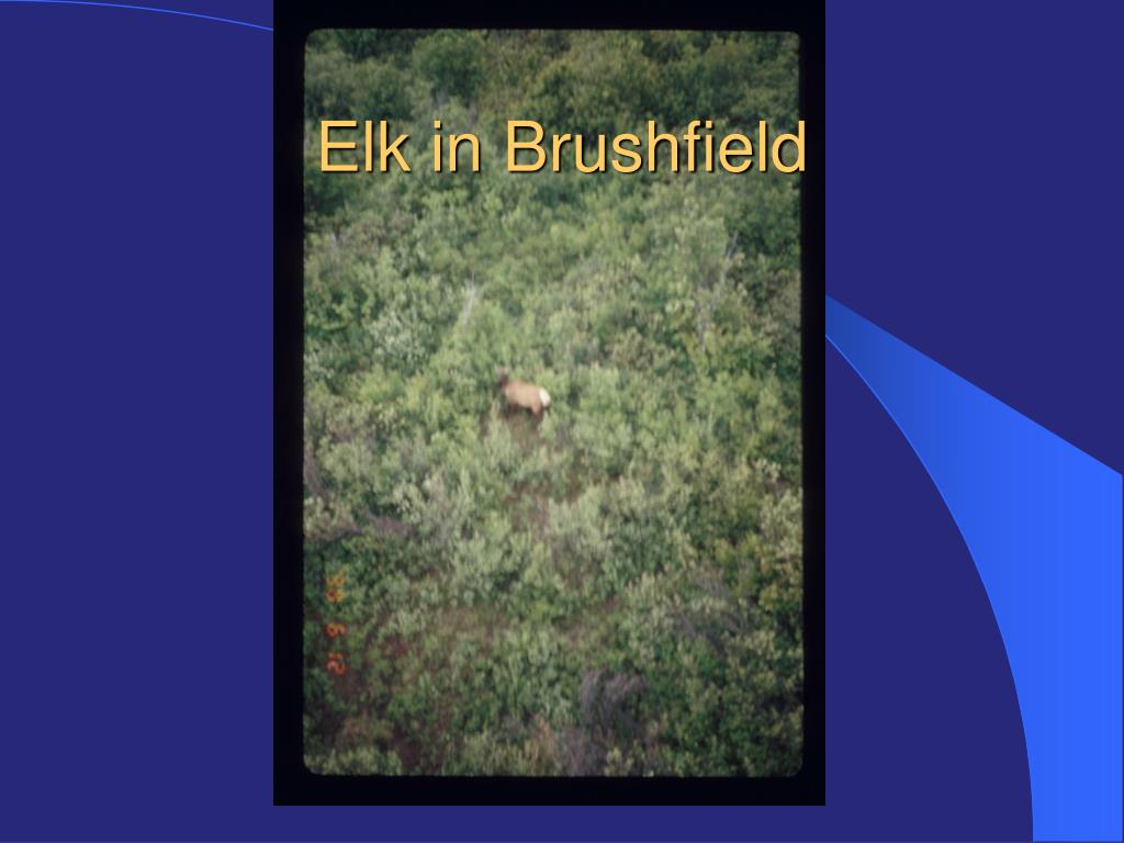 Elk in Brushfield