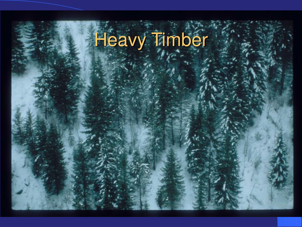 Heavy Timber