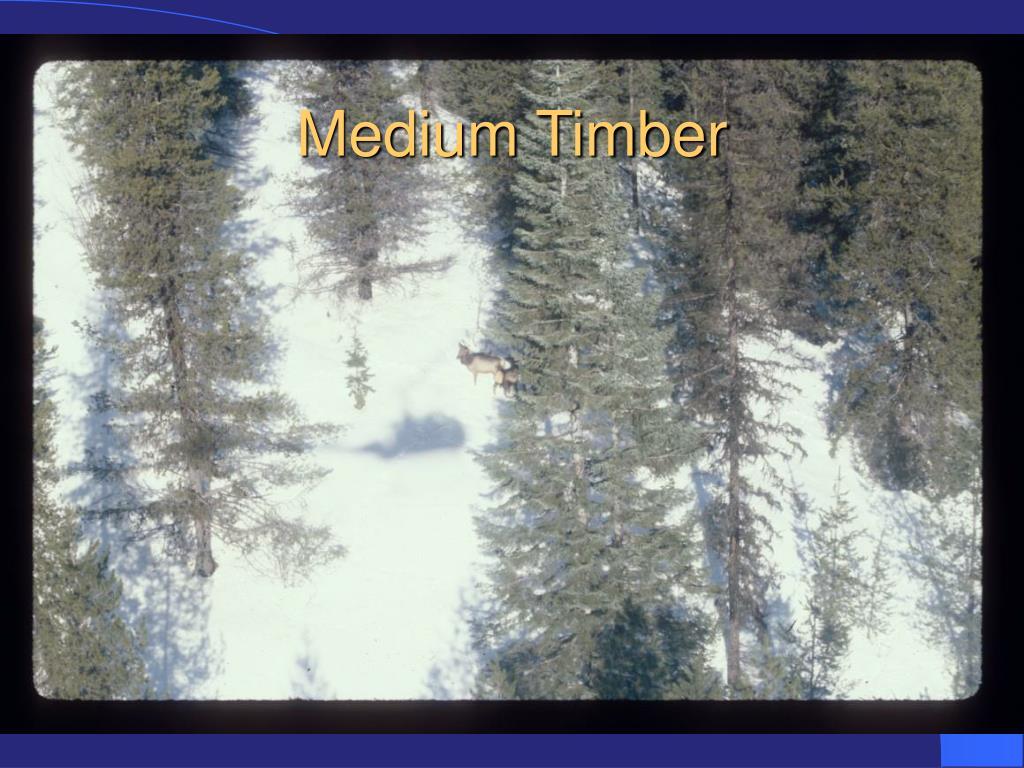 Medium Timber