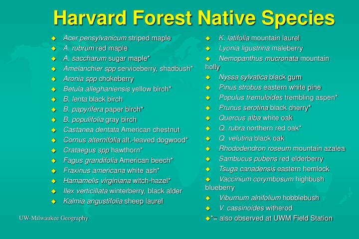 Harvard Forest Native Species