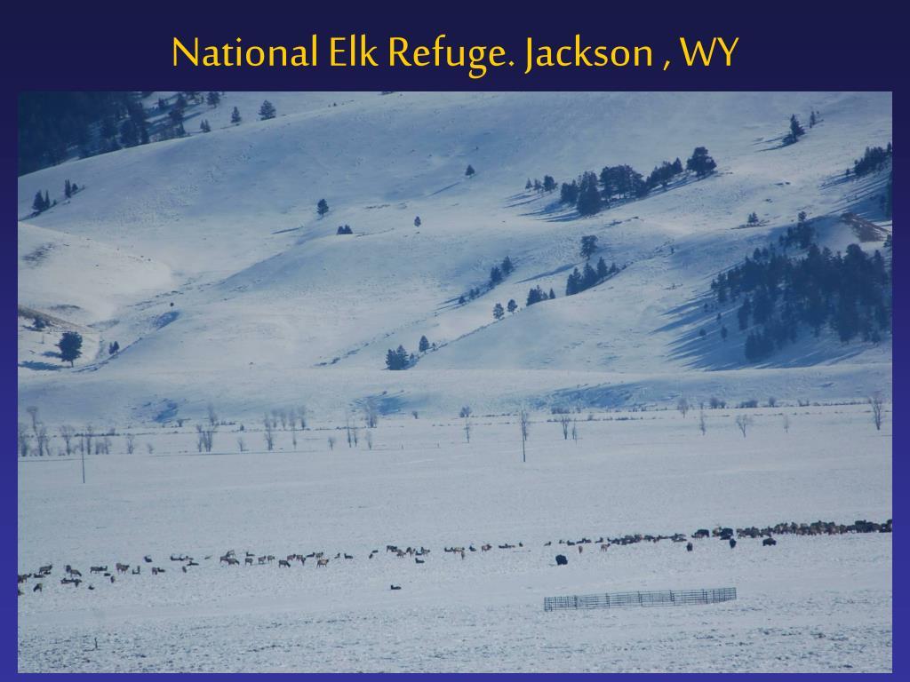 National Elk Refuge. Jackson , WY