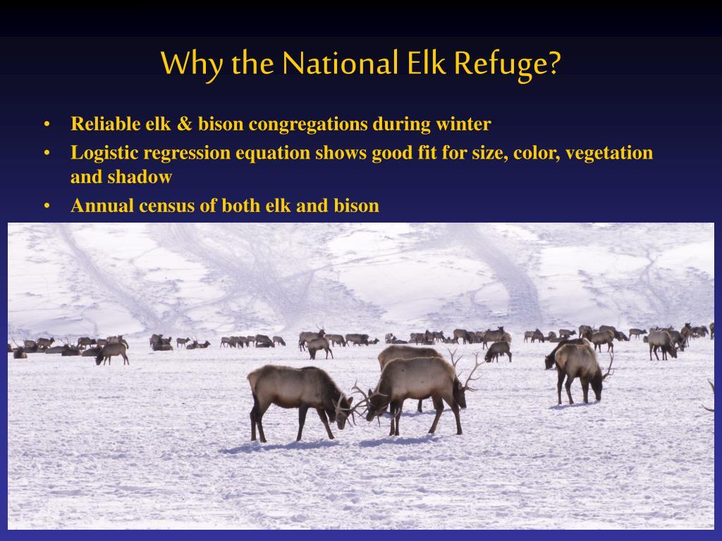 Why the National Elk Refuge?