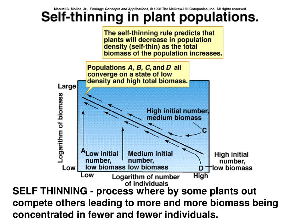 SELF THINNING - process where by some plants out compete others leading to more and more biomass being concentrated in fewer and fewer individuals.