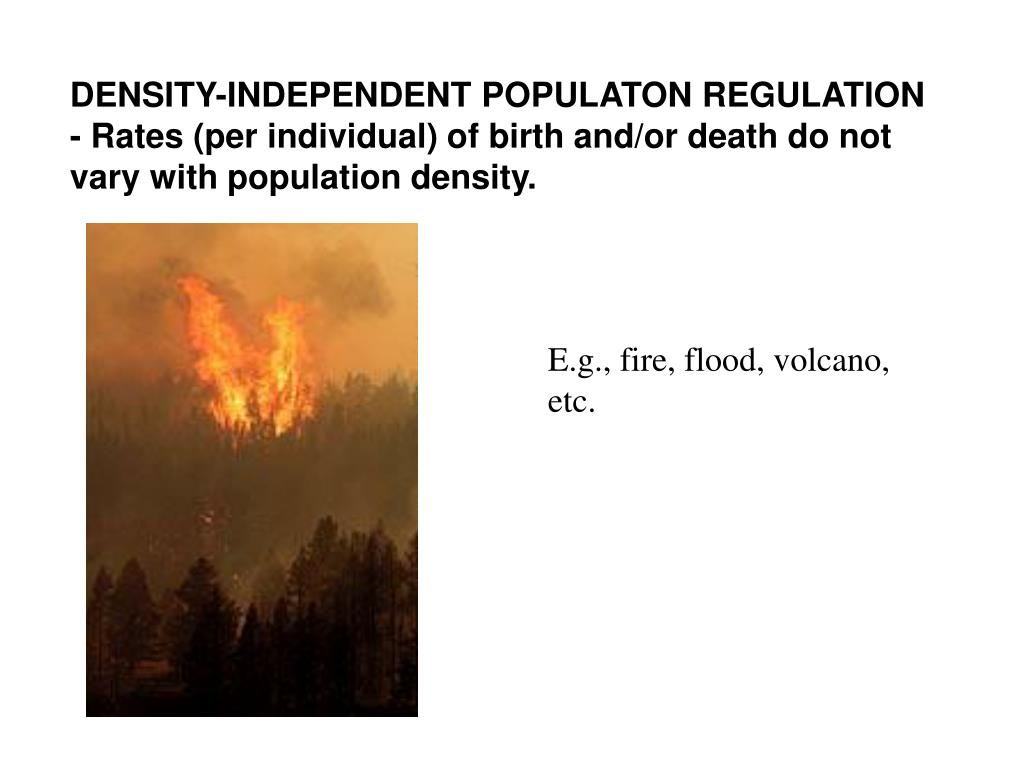 DENSITY-INDEPENDENT POPULATON REGULATION - Rates (per individual) of birth and/or death do not vary with population density.