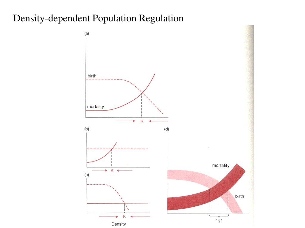 Density-dependent Population Regulation