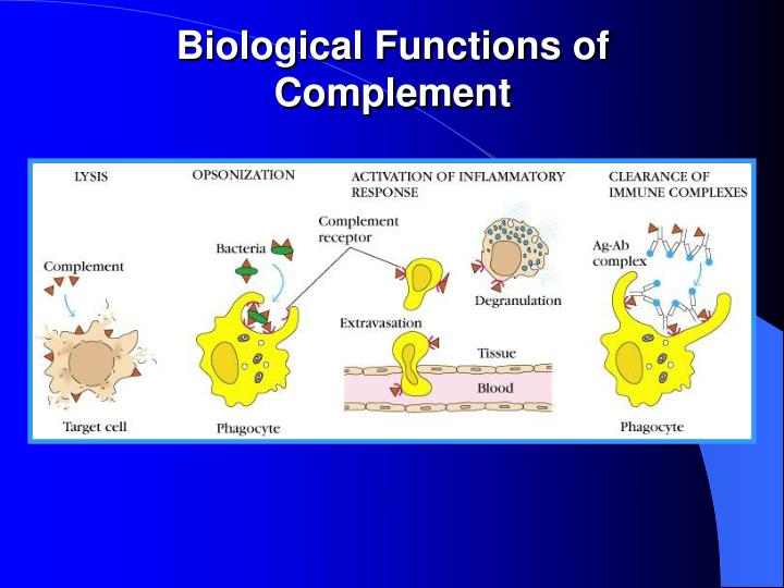 Biological Functions of