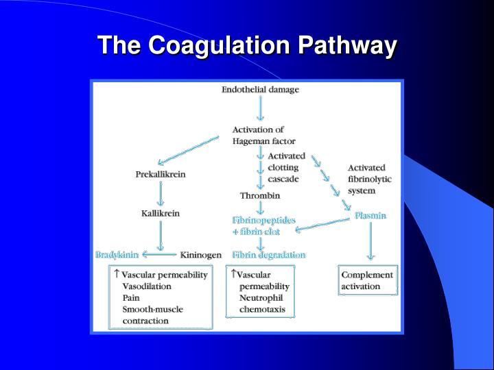 The Coagulation Pathway