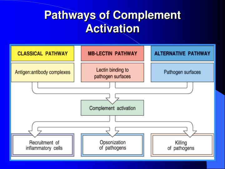 Pathways of Complement