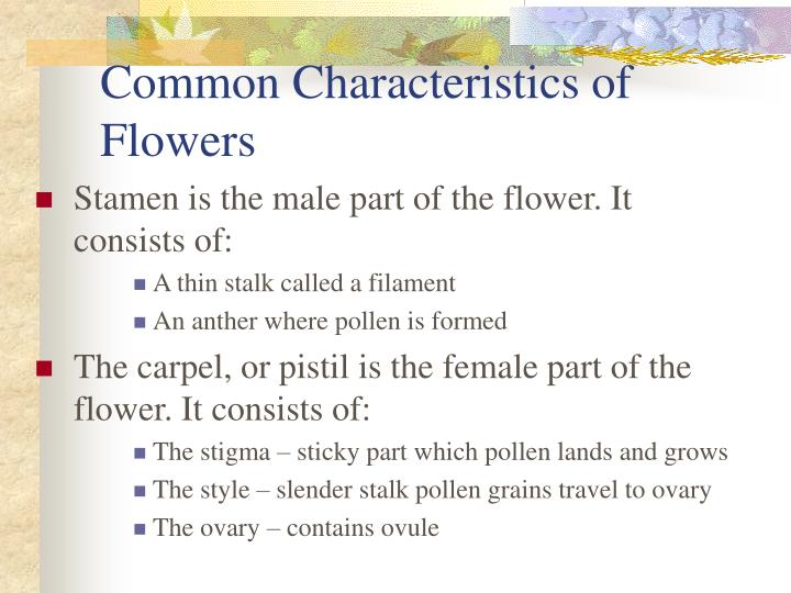 Common Characteristics of Flowers