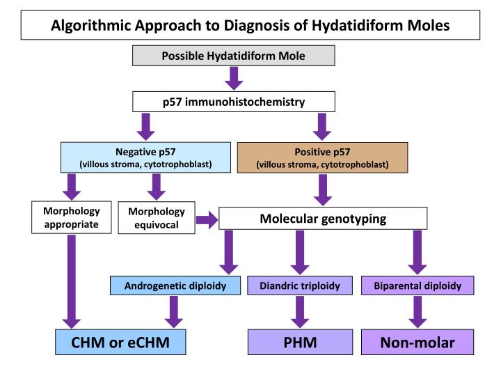 Algorithmic approach to diagnosis of hydatidiform moles