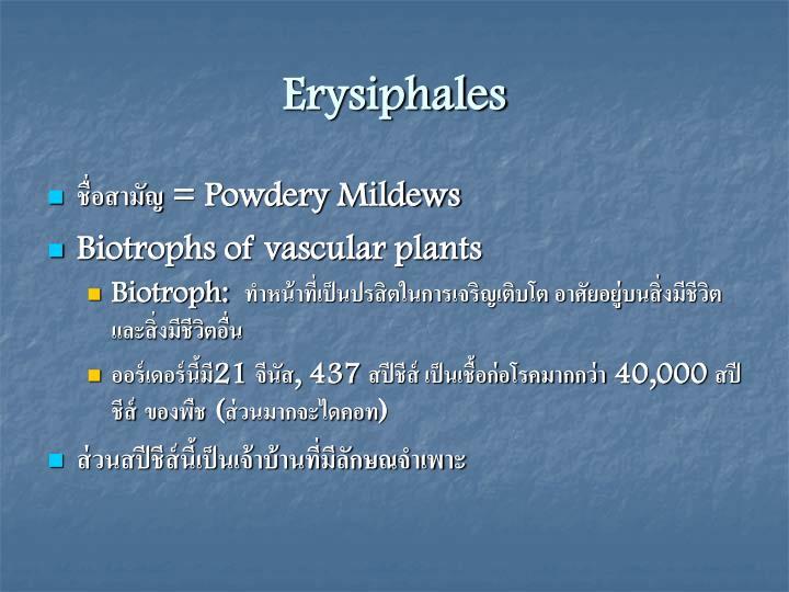 Erysiphales